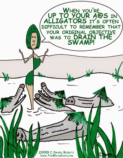 Image result for pictures of alligators in swamps