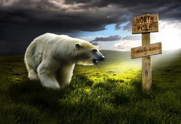 polar-bear-2925395_640